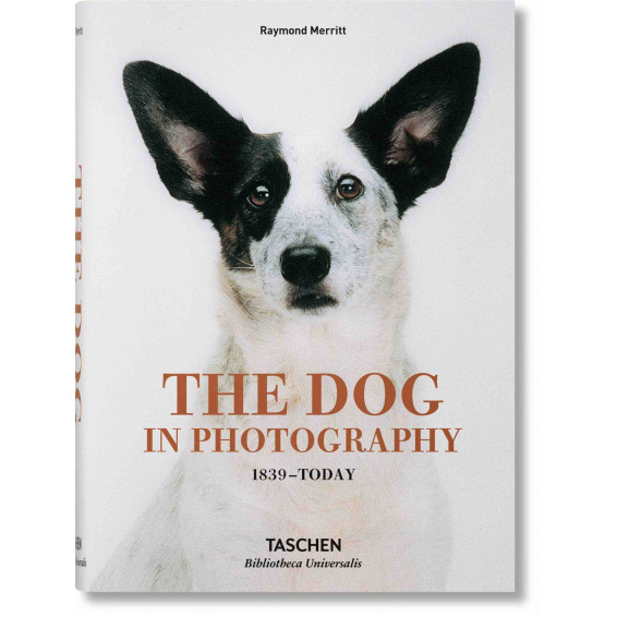 The dogs in photography
