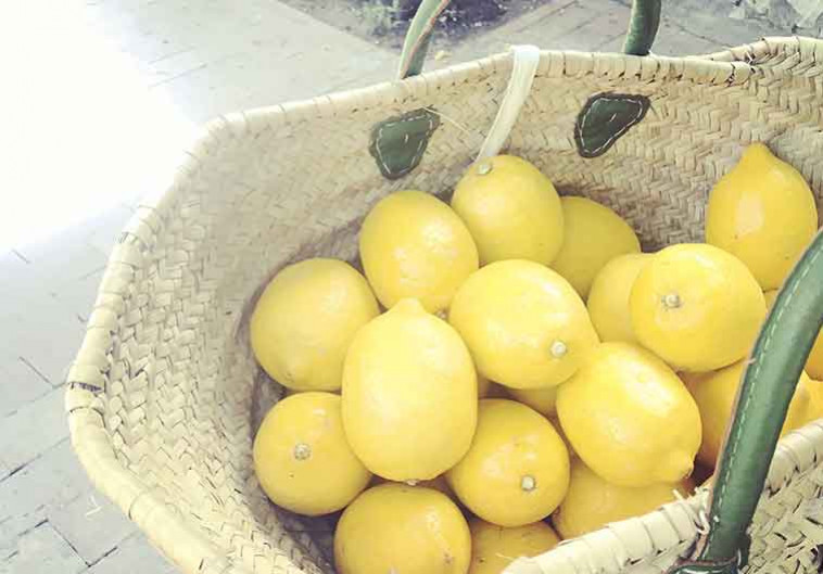 Da Paolino Lemon Trees